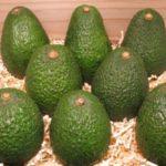 Avocado - gesund und lecker!